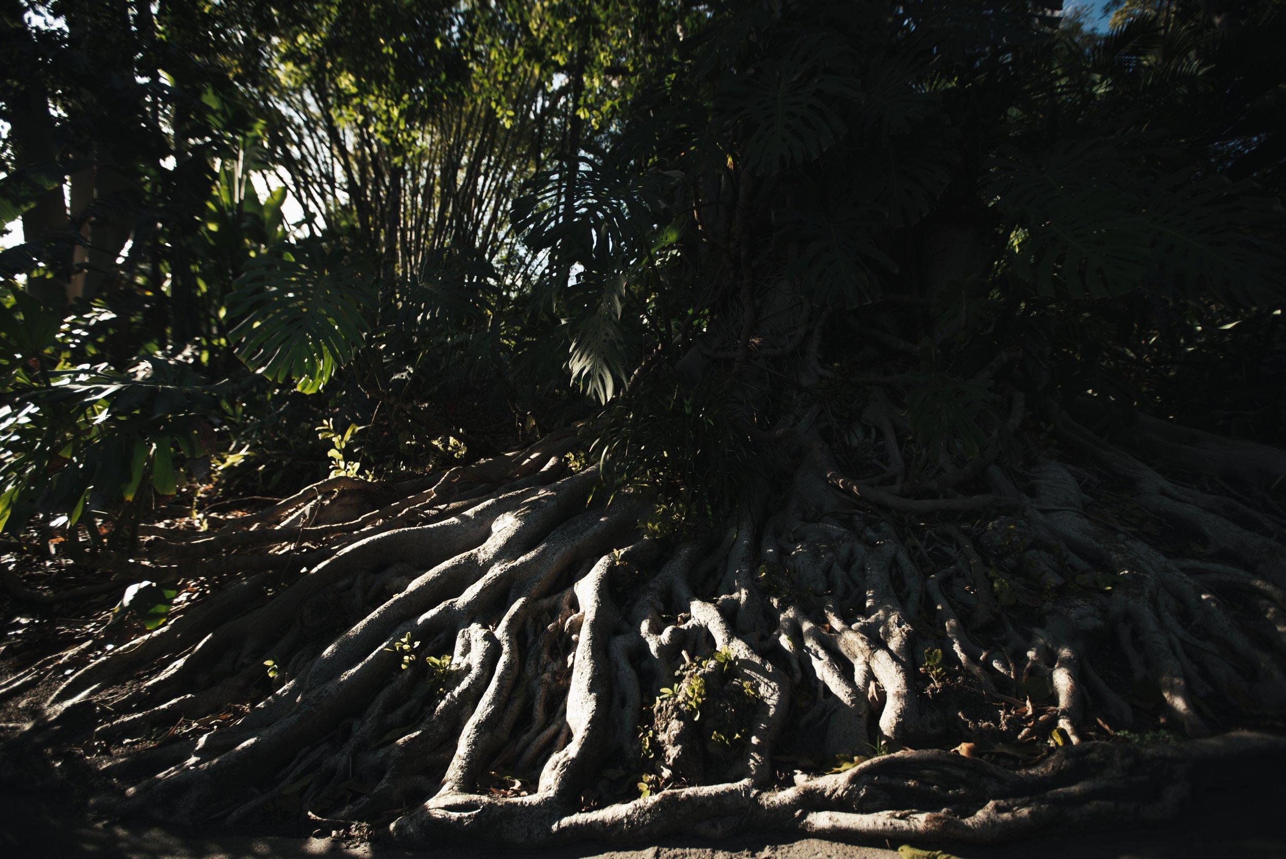 Roots 1_1.88.1.jpg