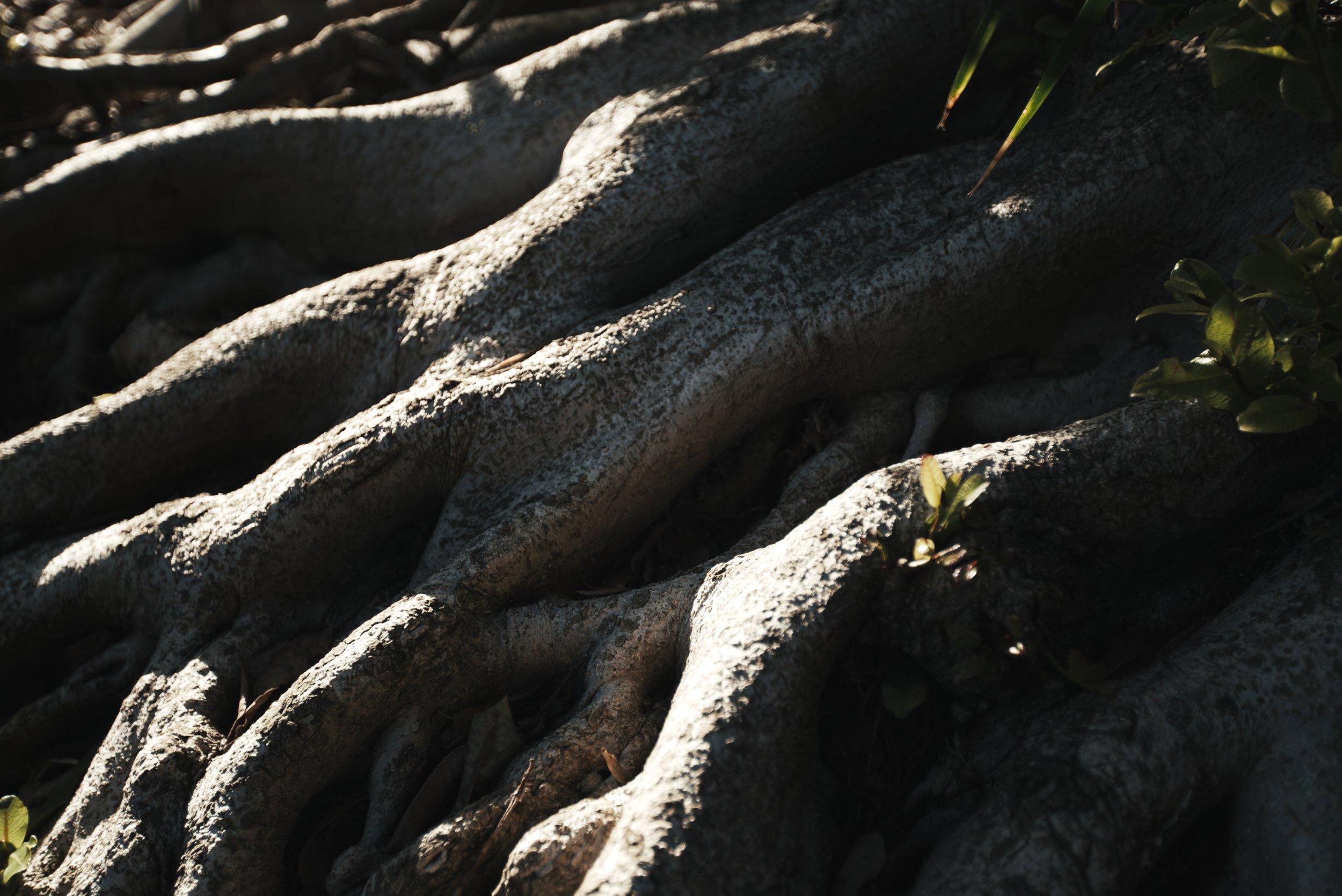 Roots 41.84.1.jpg