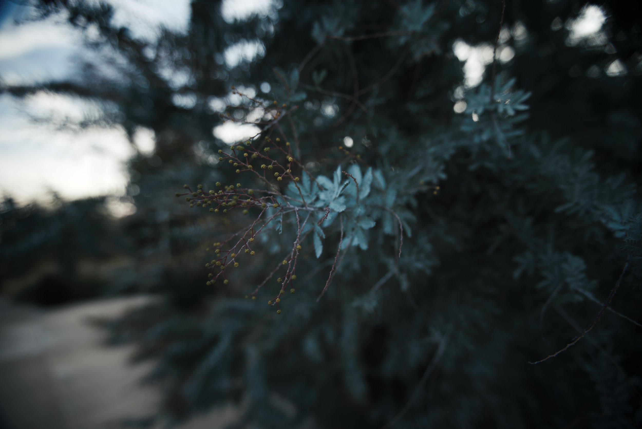 teal Plant 1_1.90.1.jpg