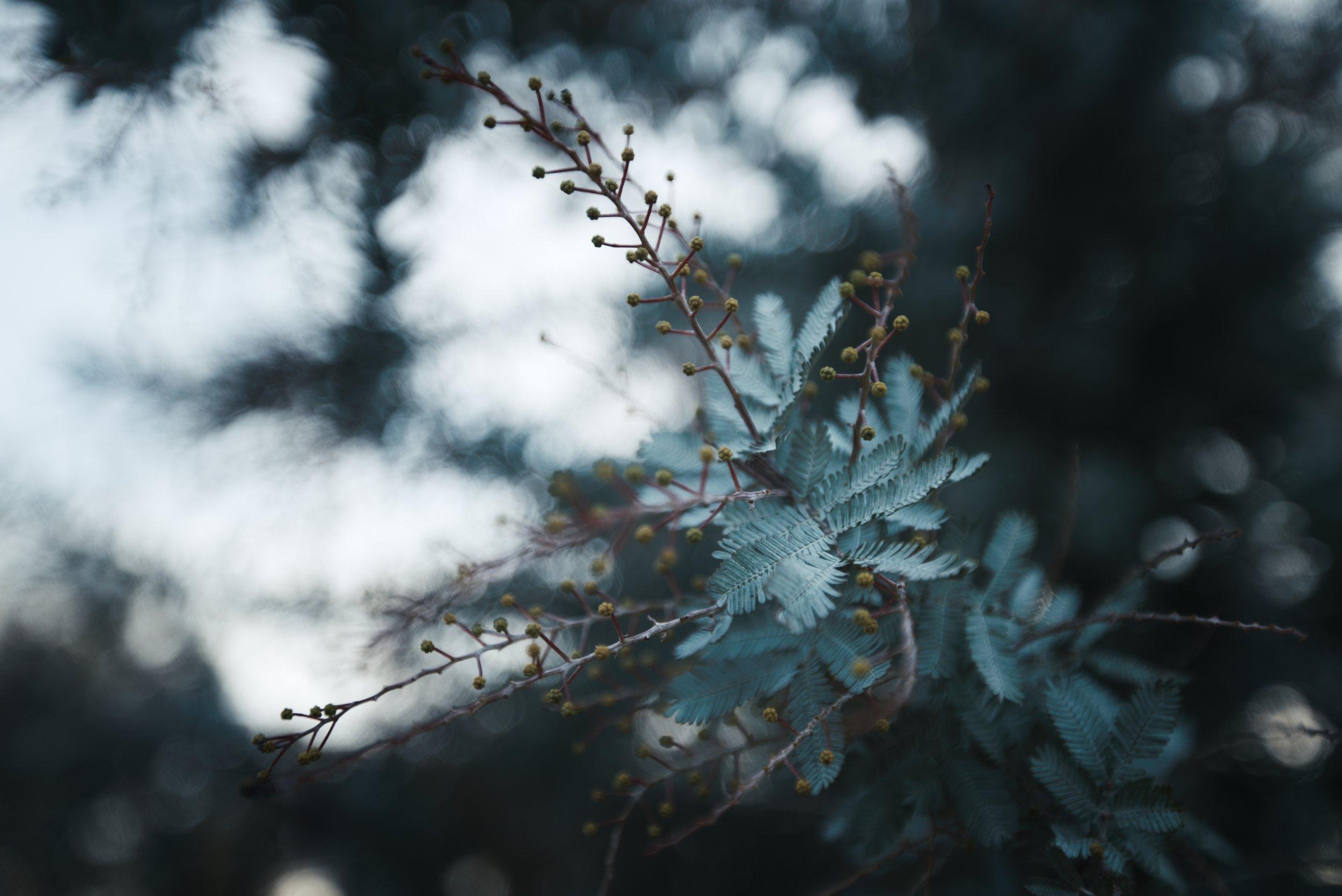 teal Plant 2_1.91.1.jpg