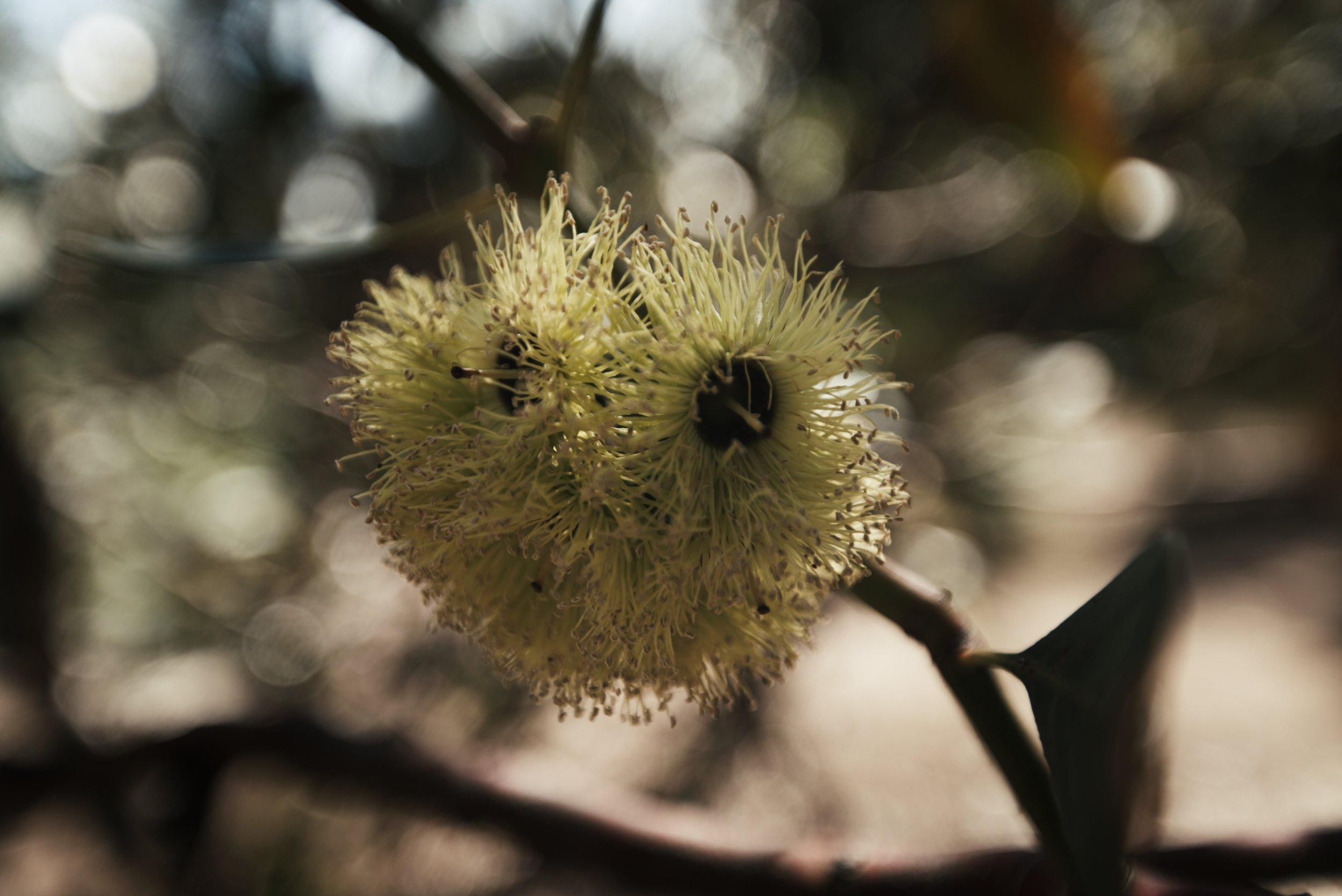 Flower 1 _1.83.1.jpg