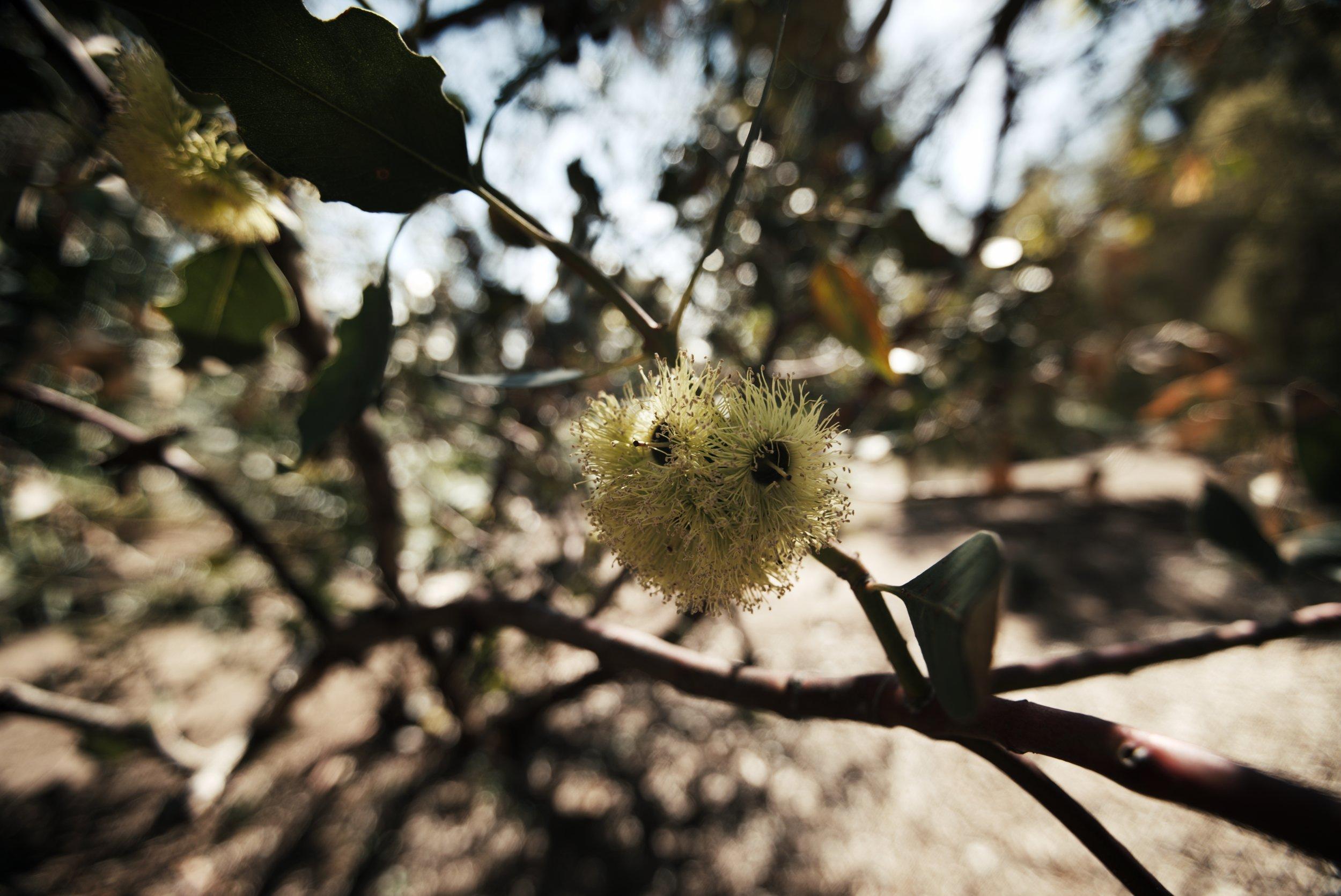 Flower 2_1.83.2.jpg