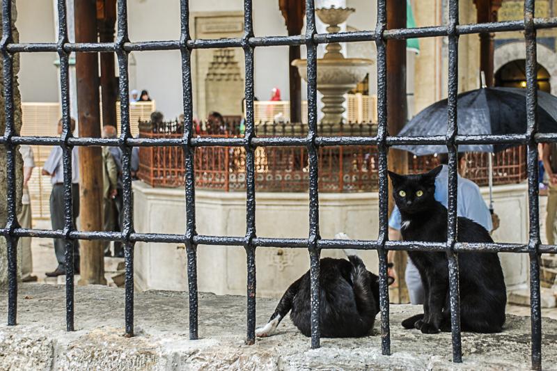 Sarajevo_culturekeeper_rice_peyrous-0400.jpg
