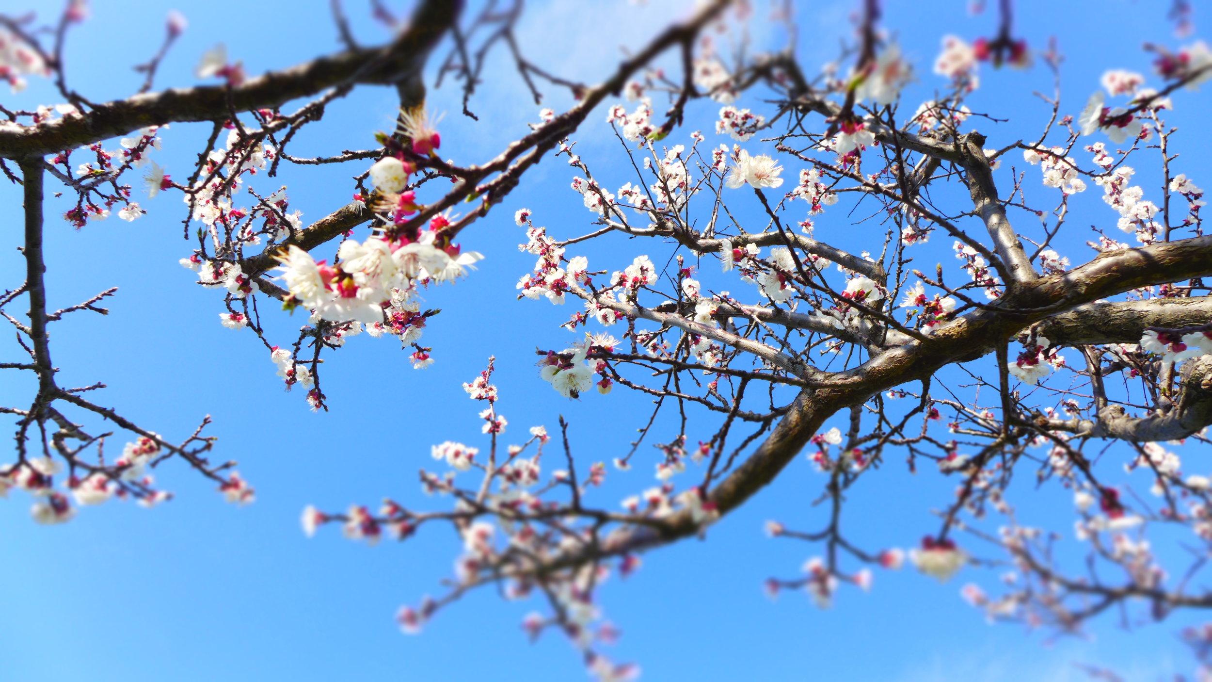 spring 1 - possible header photo.JPG