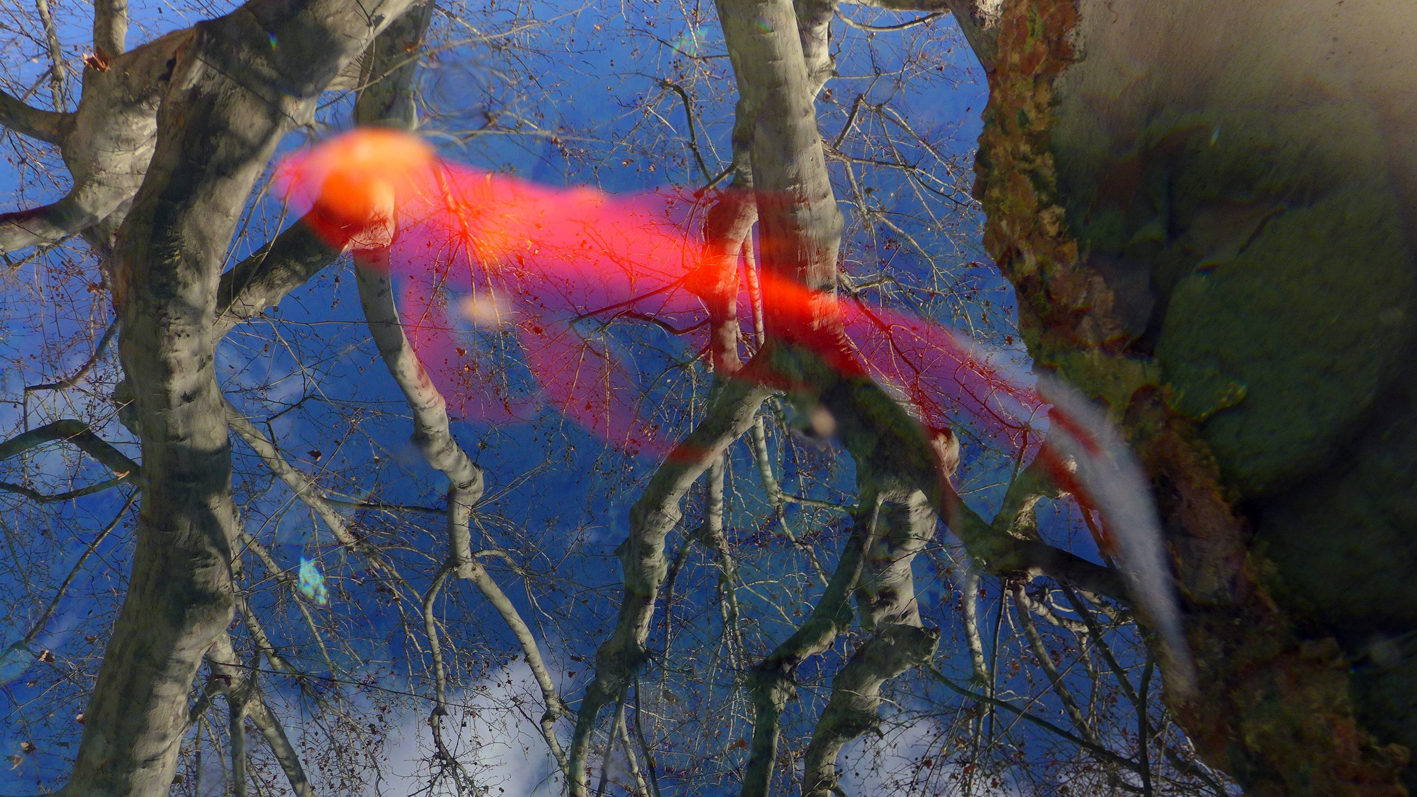 a golfish in the sky - reflection.jpg