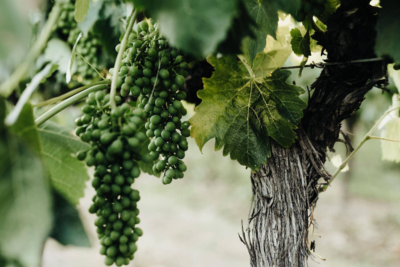 murrumbateman-winery-wedding_092(2786).jpg