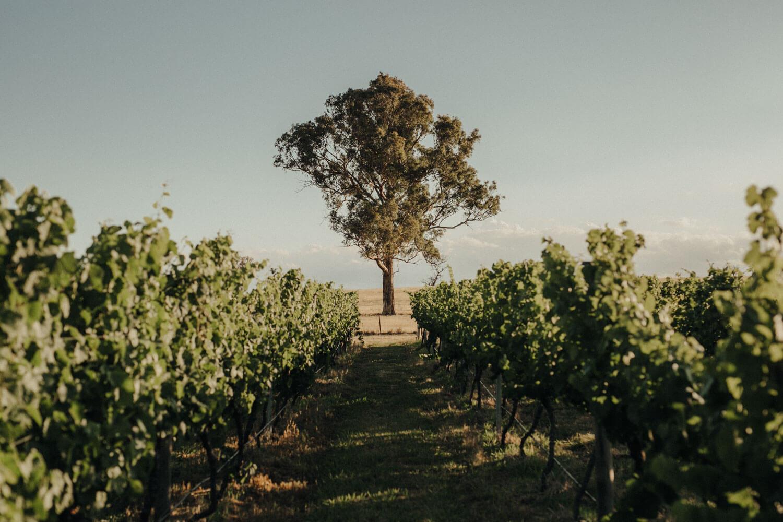 murrumbateman-winery-wedding_091(2782).jpg