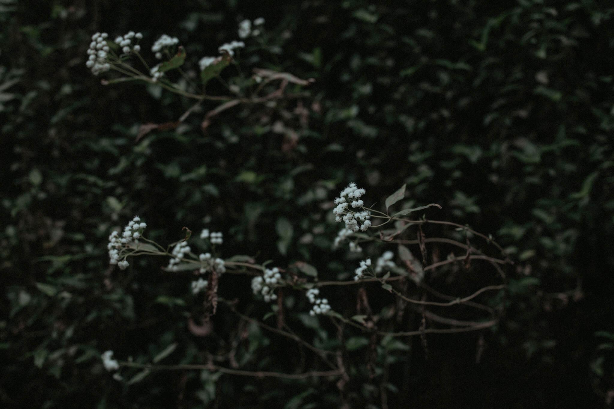 Sydney-Engagement-Photography_020(6904).jpg