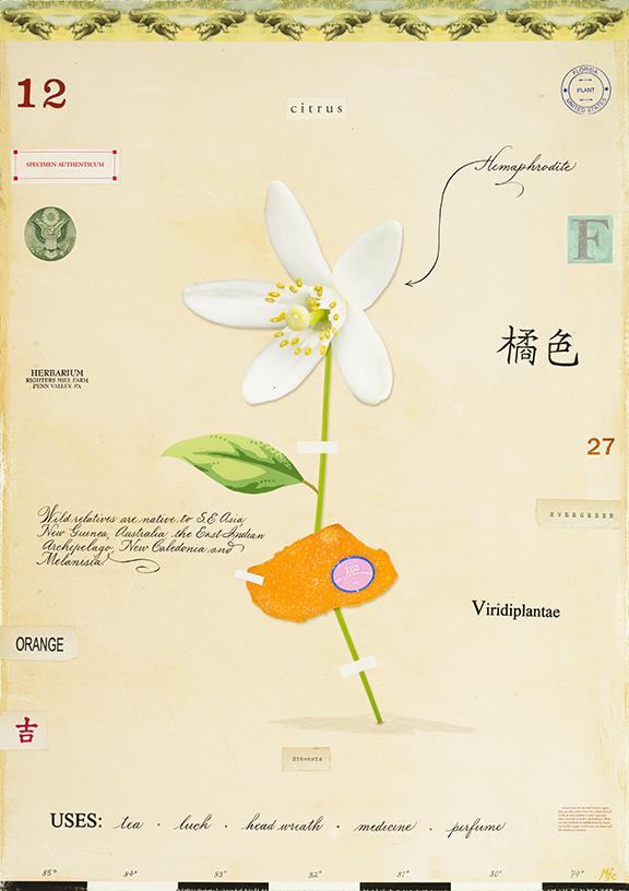 Orange Flower - 20x14