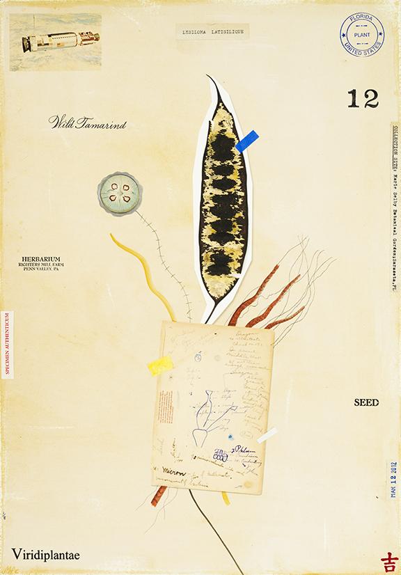 Wild Tamarind with Notes - 20x14
