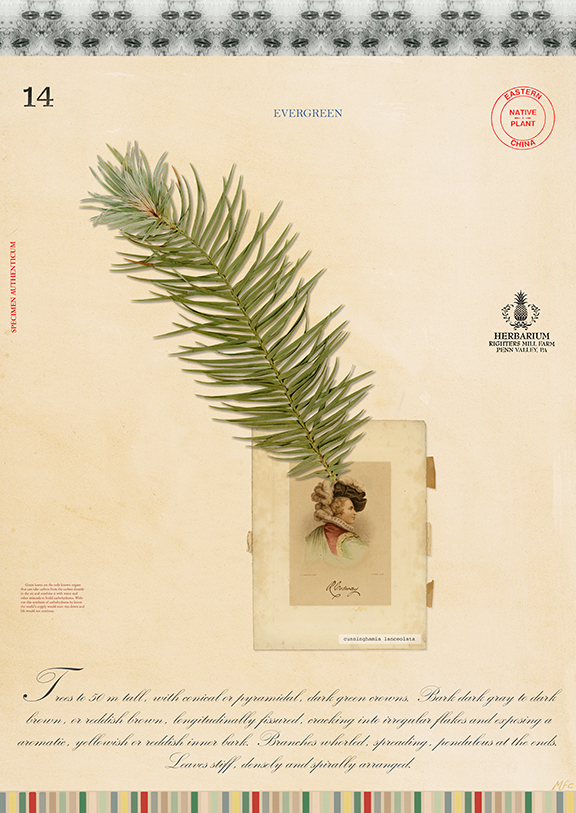 Pine with Page