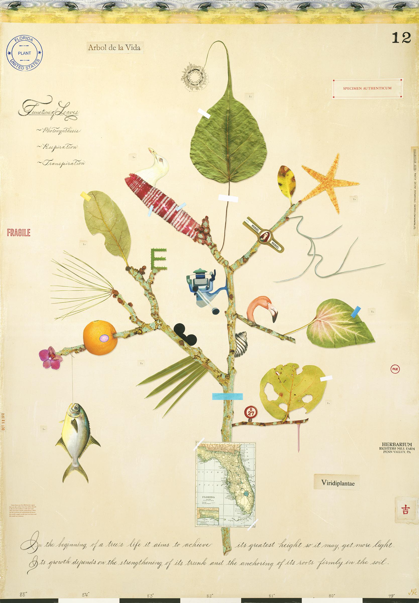 Florida Tree of Life - 43x30