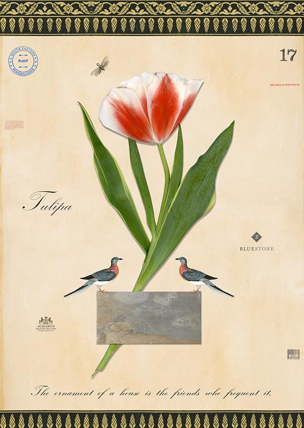 Bluestone Tulip Commission