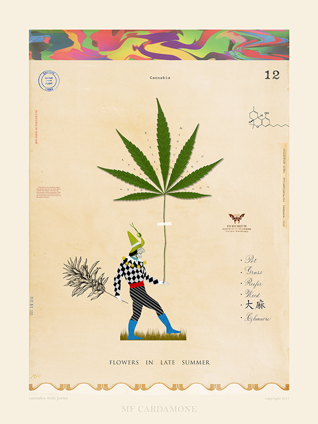 Cannabis with Jester
