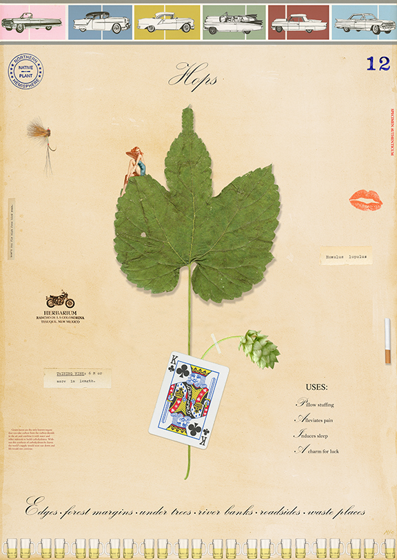 A Guy's Botanical - 24x18