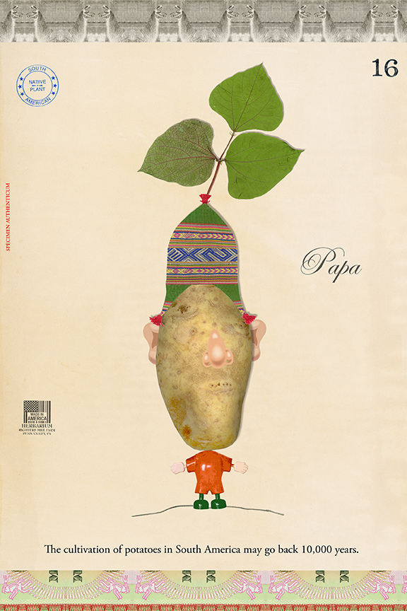 Mr. Inca Idaho Potato Head - 27x18