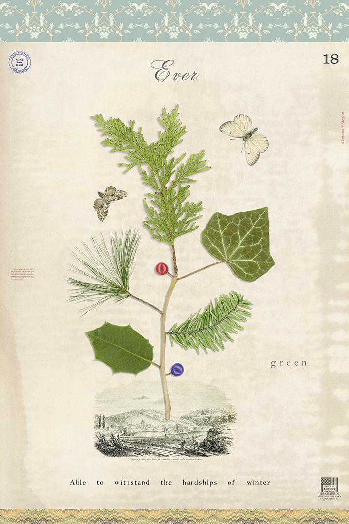 Evergreen Tree of Life - 36x24