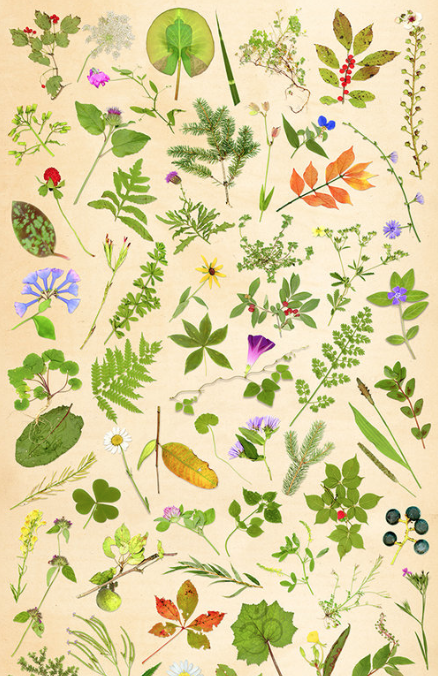 108 PLANT COLLECTION