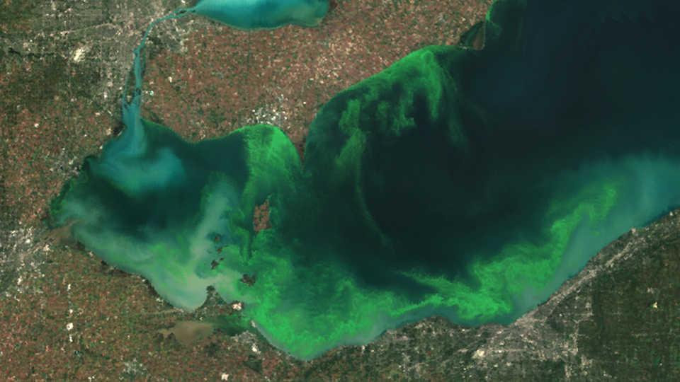 cyanobacteriaerie.jpg