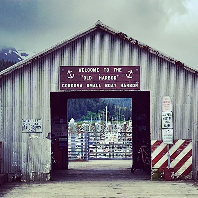 Where dreams are made and teeth get cut. The Alaska fishing industry is not for the faint of heart. . . #alaska #cordova #fisheries #roots #sharingalaska #knowyourfisherman #family #askforalaska #akwild