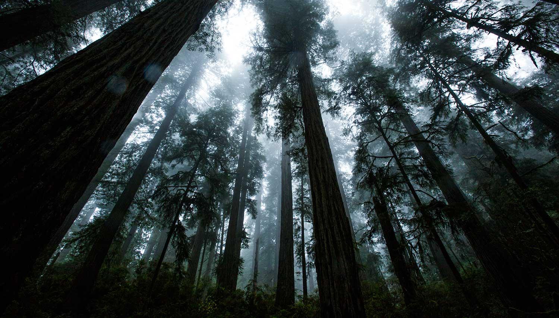 jedediah-trees-5081.jpg
