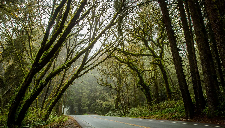 redwoods-0070.jpg