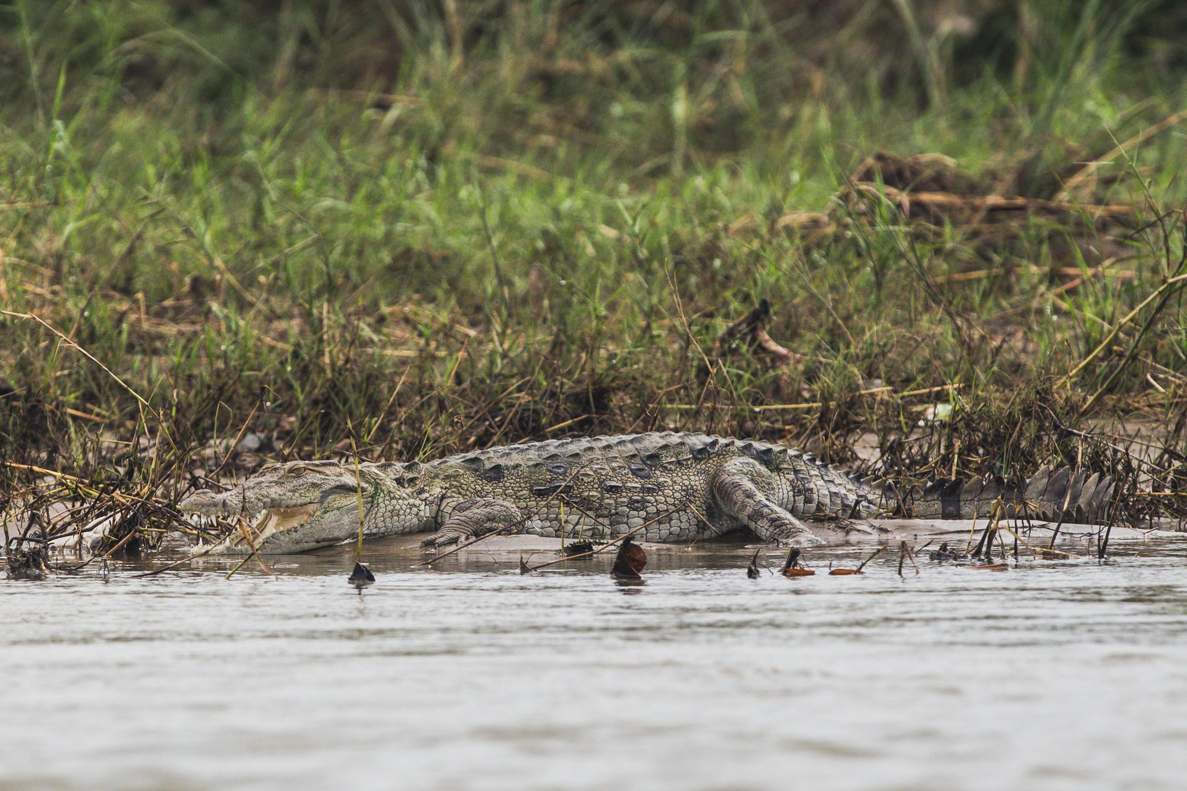 Crocodiles...  200mm f5.6 1/1000 ISO640