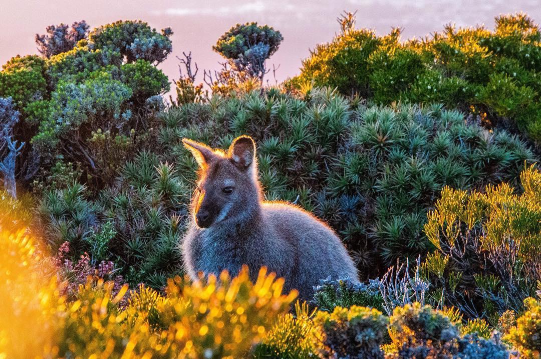 Morning Glow, Mt Wellington, Tasmania