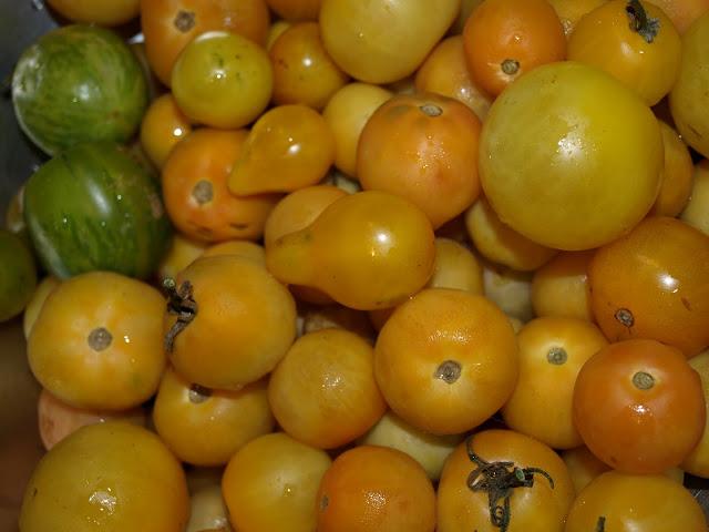 Yellow+Tomatoes+2.JPG