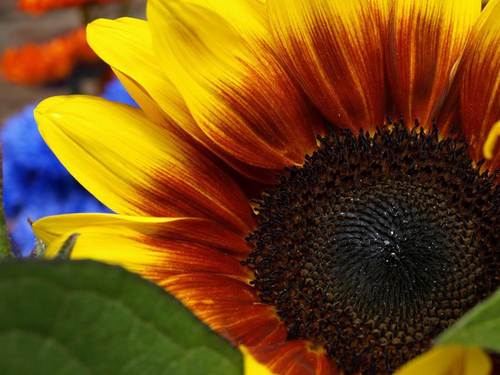 Garden_5.jpg