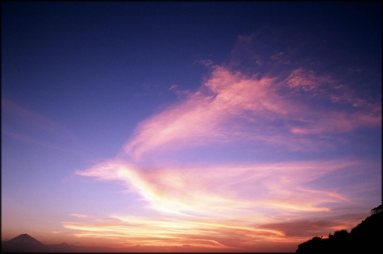 Bali, bird in the sky