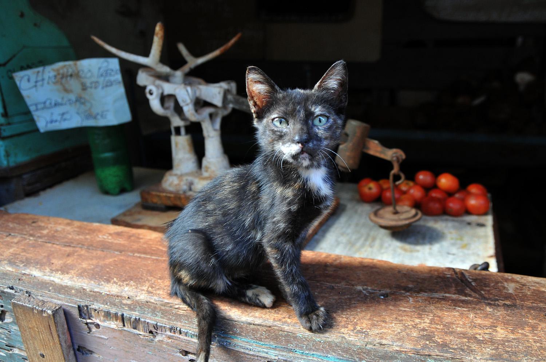 Cat, Santiago, Cuba