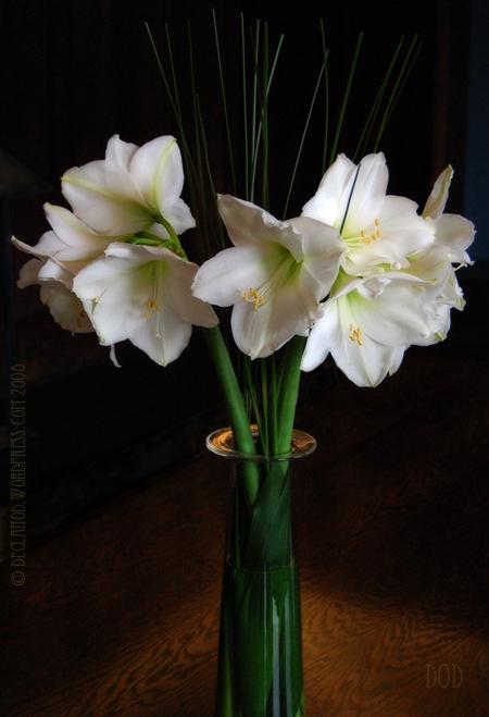 Full-Blooms2cWP.jpg
