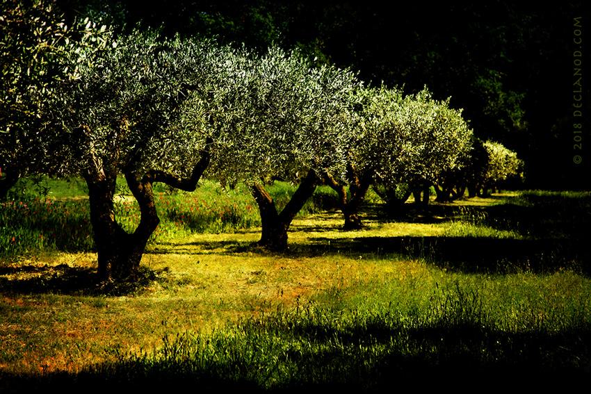 OliveTrees4Web5.jpg