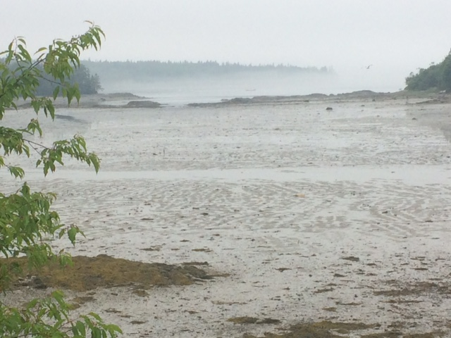 Advective fog beyond low tide mud