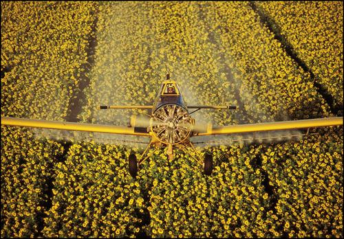 Alan-Chorman-sunflowers-lr.jpg