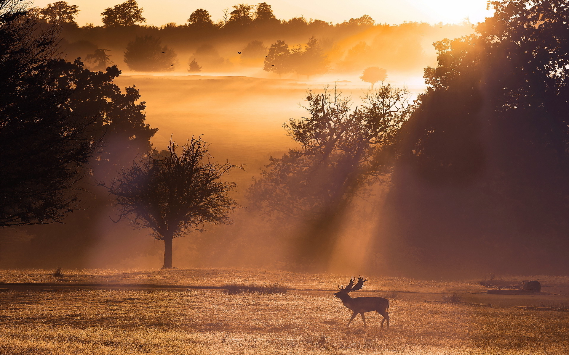 deer-sunset-landscape.jpg