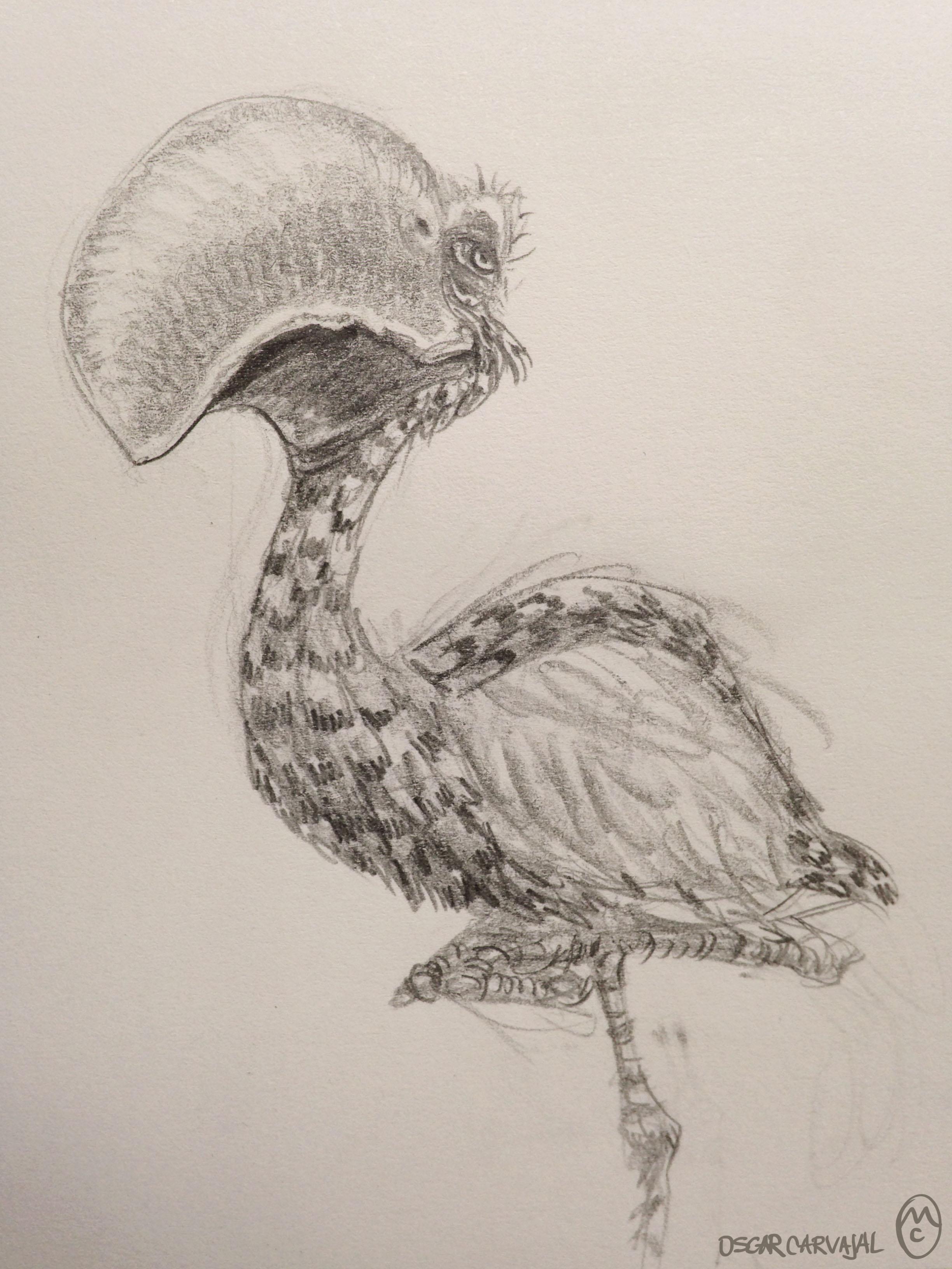 big bird.jpg