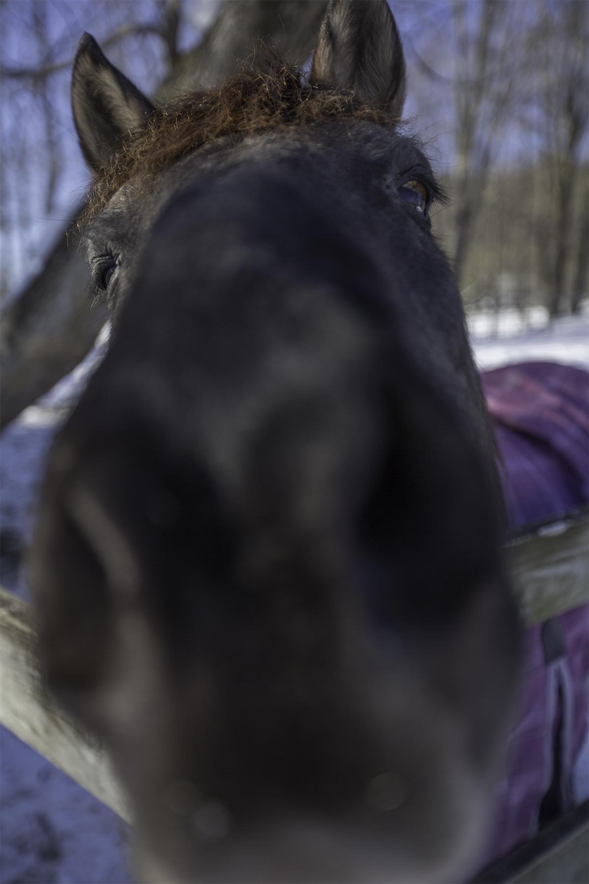 horse at shoot.jpg