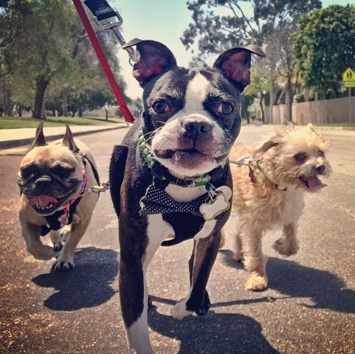 Walks exercise your pup's body & mind :)