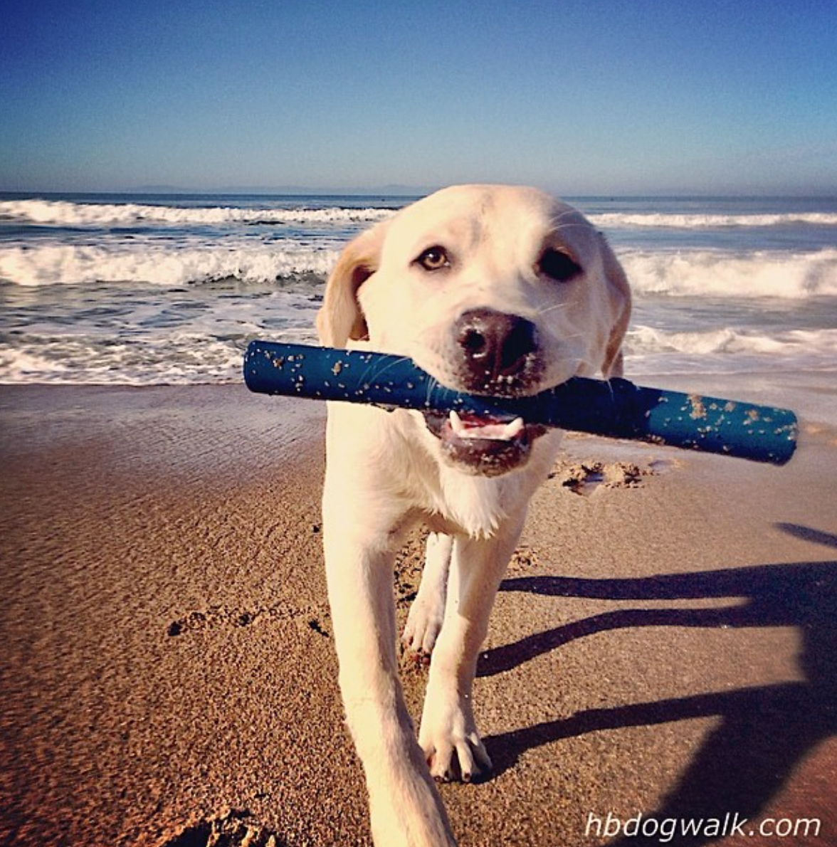 It's like summer camp for your dog!