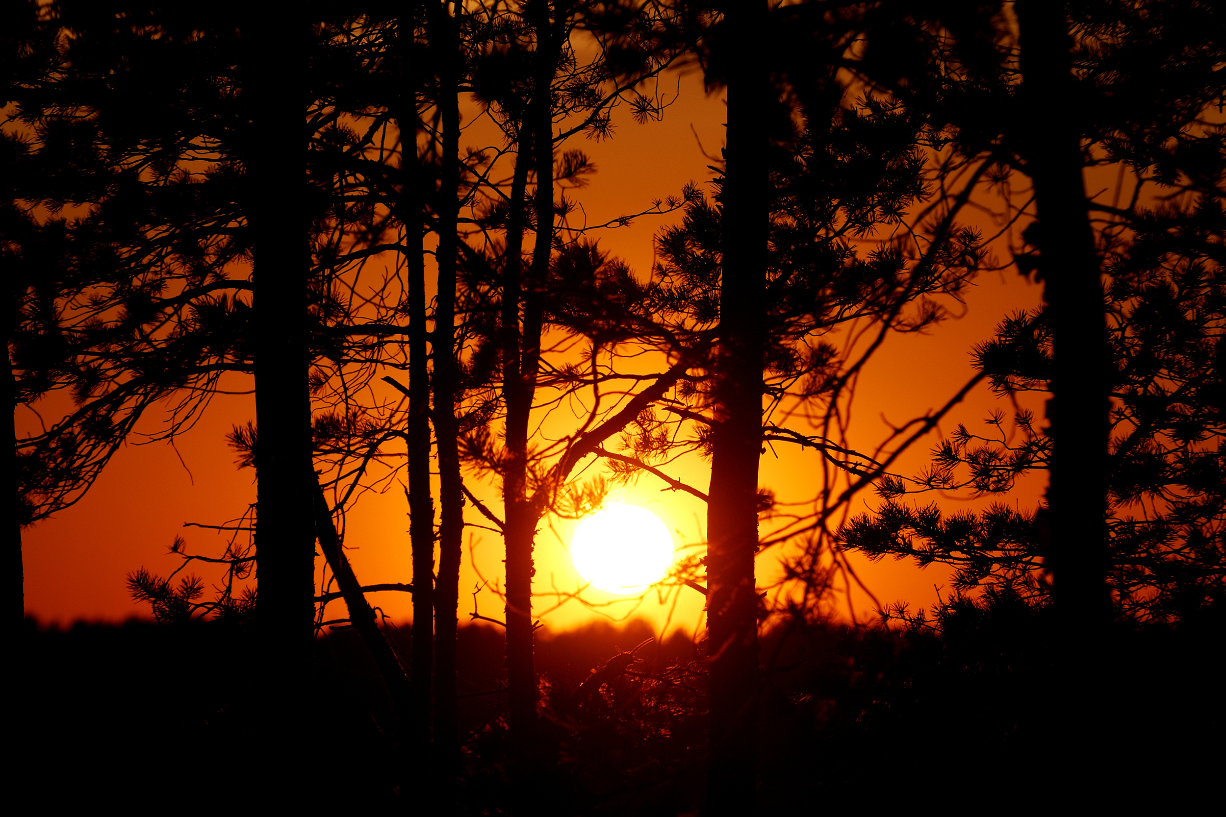 Tree silhouettes against orange sunset