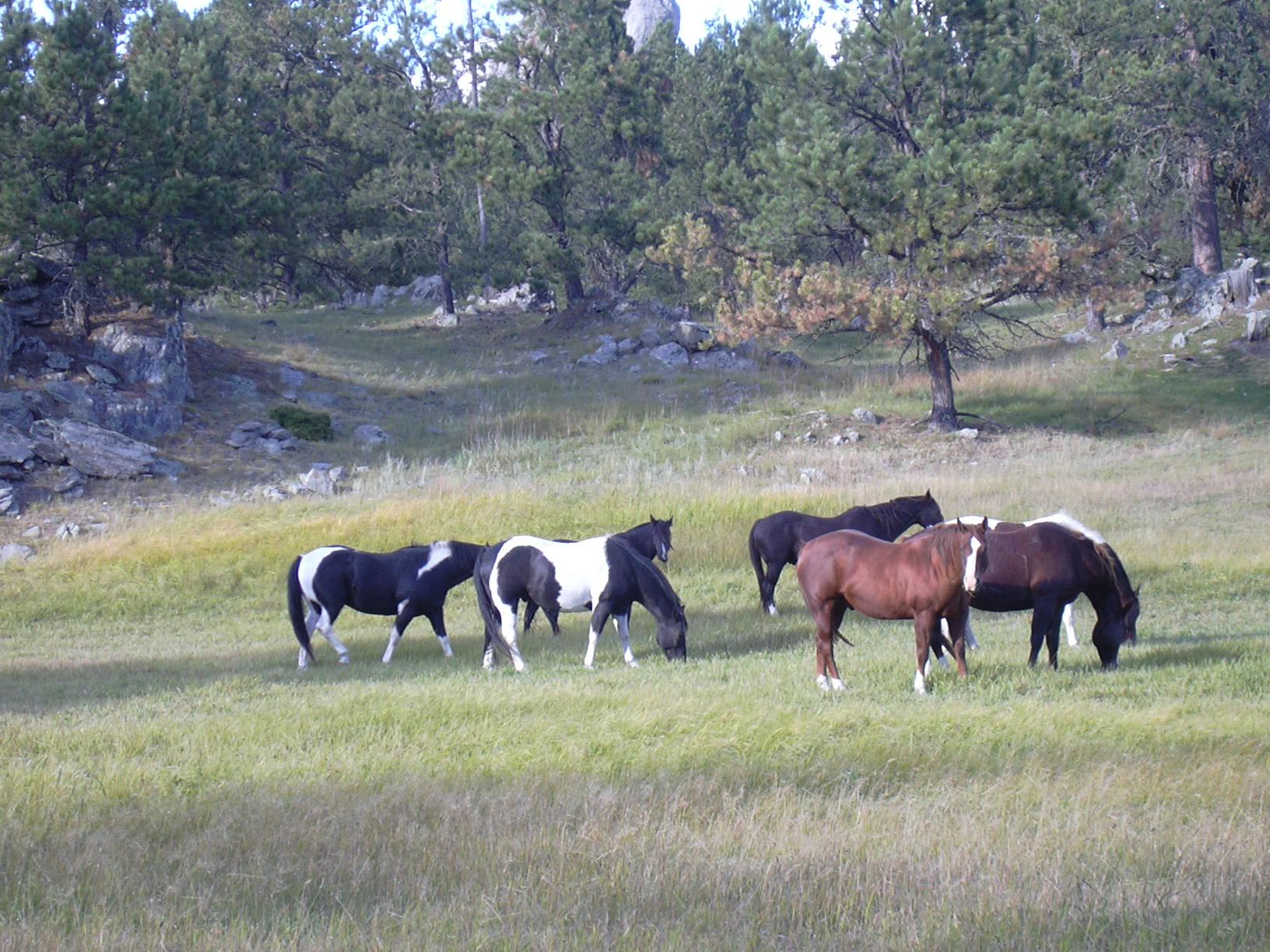 Grazing horses.JPG