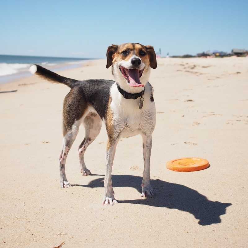 Abby loves the beach, she's got her favorite game to play, a shady spot to hang out in, and plenty of fresh water.