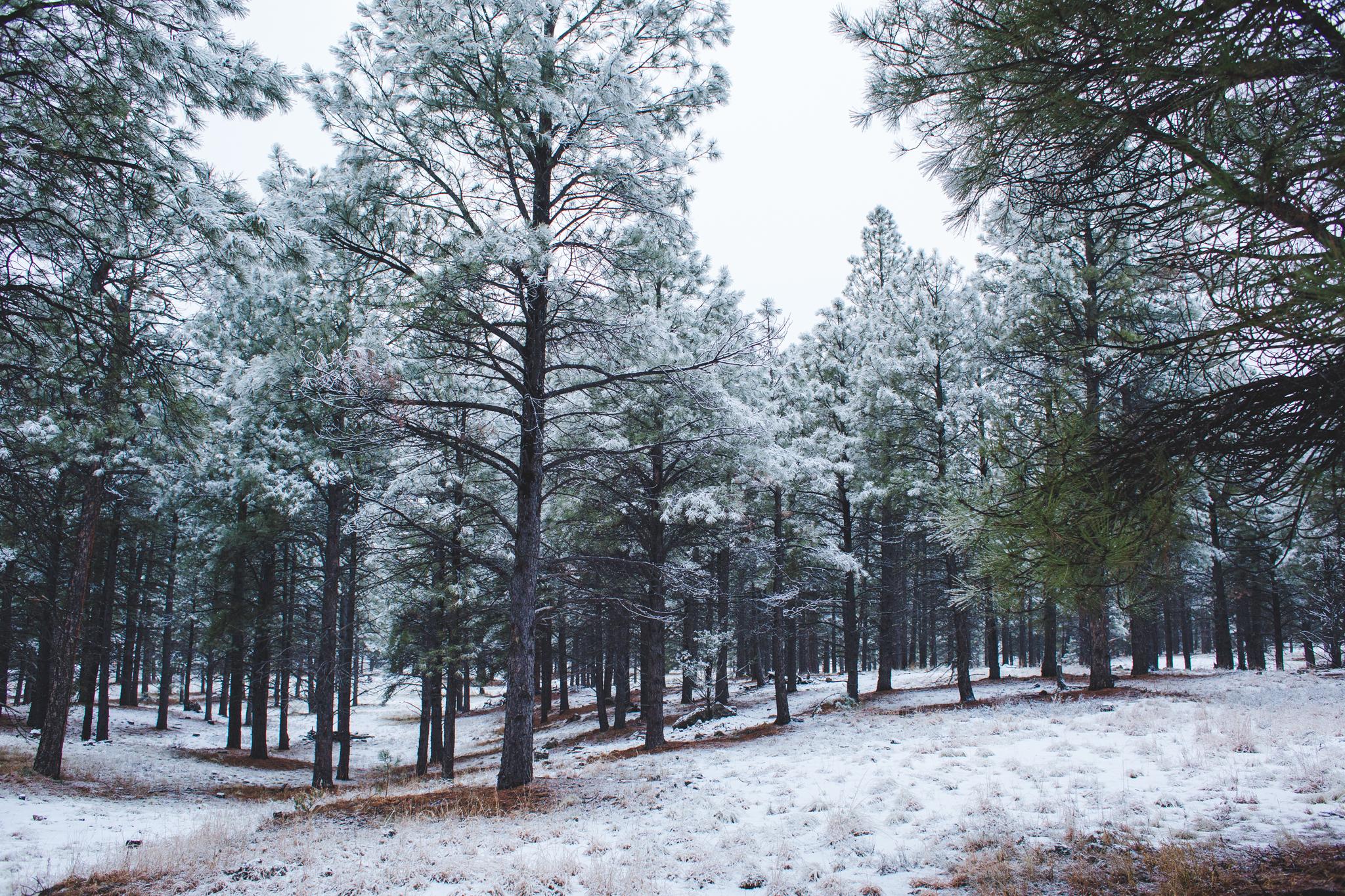 snow covered tress landscape color 2