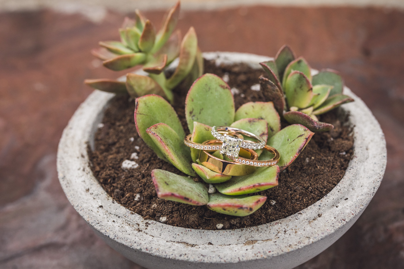 rings-and-succulents