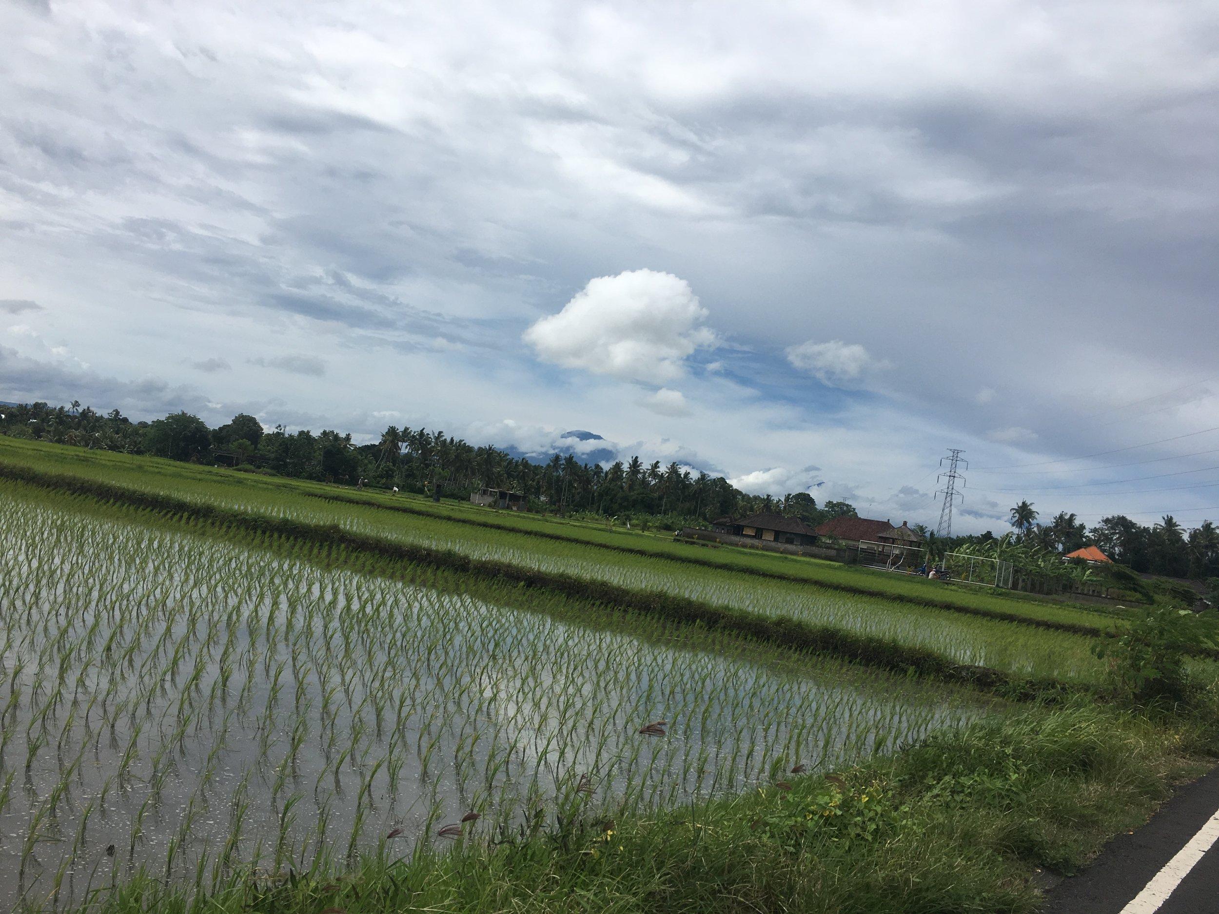 Motorbike through rice fields of Western Bali