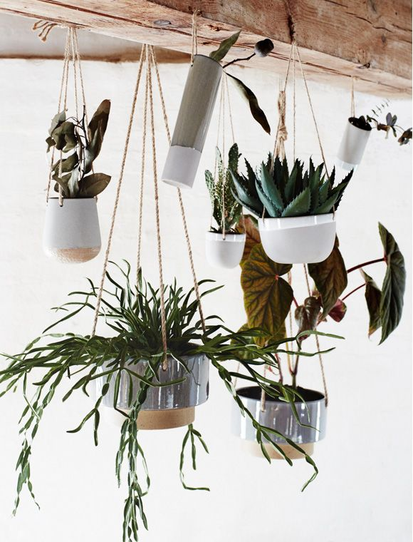 Psychological Value - Growing and looking after plants can release and alleviate everyday stress. Studies have found that cultivating plants as a hobby is one of the best ways to improve mental as well as physical well being at any age.
