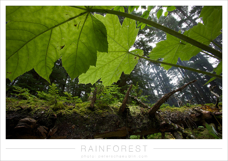 blog_20120915_alaska_14.jpg