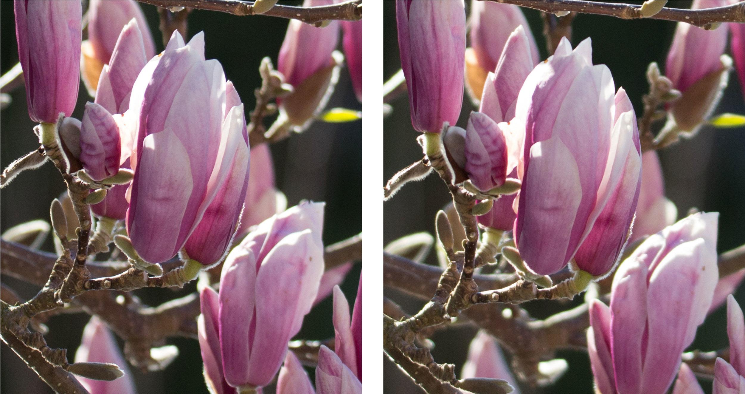 1:1 Ausschnitte bei 150 mm und voll offener Blende 5.0 links Sigma Sports 150–600mm f5–6,3 DG OS HSM, rechts Tamron SP 150–600mm f5–6.3 VC US (für vergrösserte Ansicht auf die Bilder klicken)